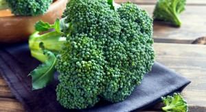 Meksyk jest piątym co do wielkości producentem brokułów na świecie