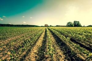 Ziemia rolna w Polsce nadal drożeje