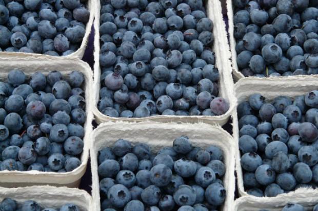 Plantatorzy borówki promują spożycie tych owoców