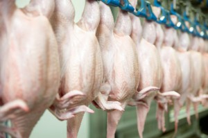 Rynek drobiu w UE: Coraz większa presja na producentów przy rosnącym imporcie z krajów trzecich