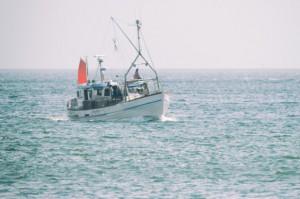 Aktywiści oskarżają Holandię o dotowanie połowów prądem
