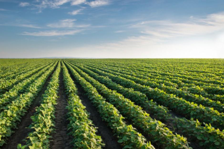 KOWR: O 4 proc. w skali roku potaniały państwowe grunty rolne