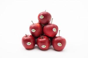 Marka Jabłka Grójeckie obchodzi 500-lecie istnienia