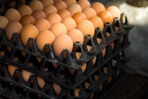 Ukraina: Ovostar Union chce produkować 2 mld jaj rocznie i zwiększać eksport do UE