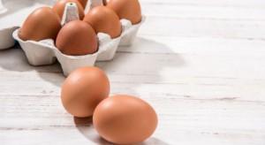 Iglotex wyjaśnia dlaczego rezygnuje z jaj z chowu klatkowego