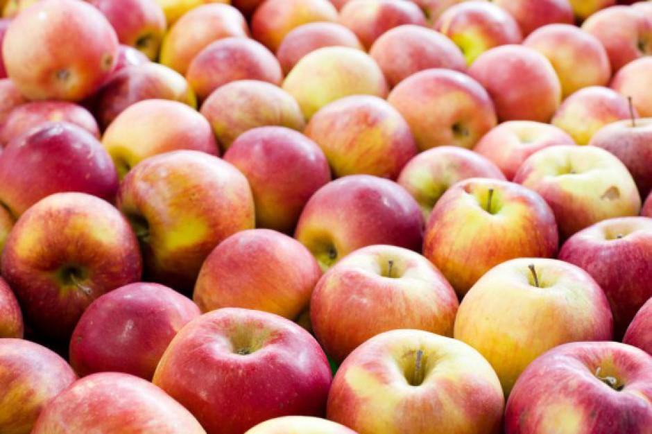 Bronisze: Wysokie ceny jabłek z ubiegłorocznych zbiorów