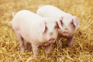 Chiny największym rynkiem dla podrobów i wieprzowiny