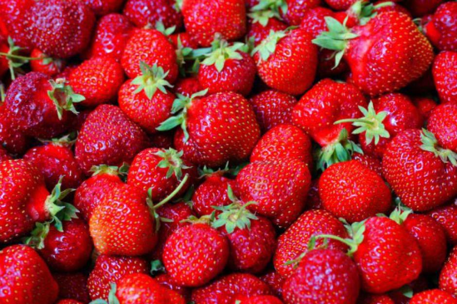 Ukraińcy podpatrzyli w Polsce jak hodować truskawki i zmniejszają import
