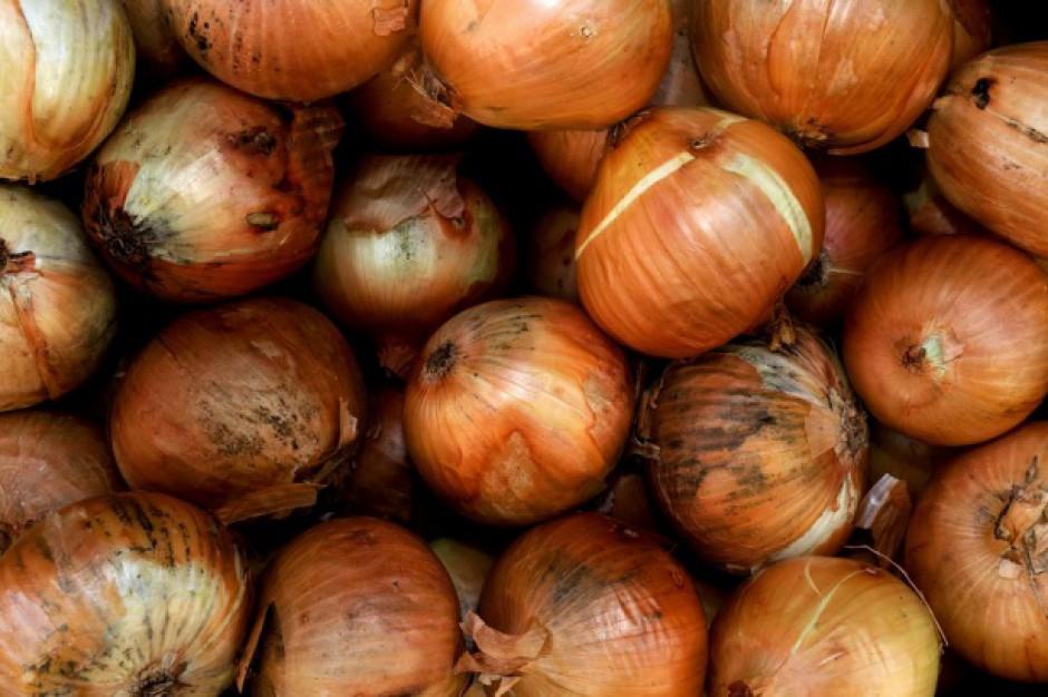 Analiza GUS: straty przechowywanych warzywach na poziomie ubiegłego sezonu