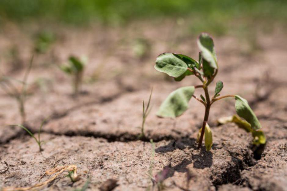 W środę 20 czerwca na posiedzeniu rządu informacja nt. suszy w Polsce