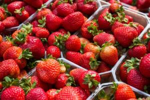 Florence - nowa angielska odmiana truskawki deserowej