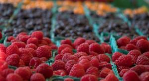 Bronisze: Polskie czereśnie, truskawki, maliny, borówki amerykańskie i agrest w jednym czasie