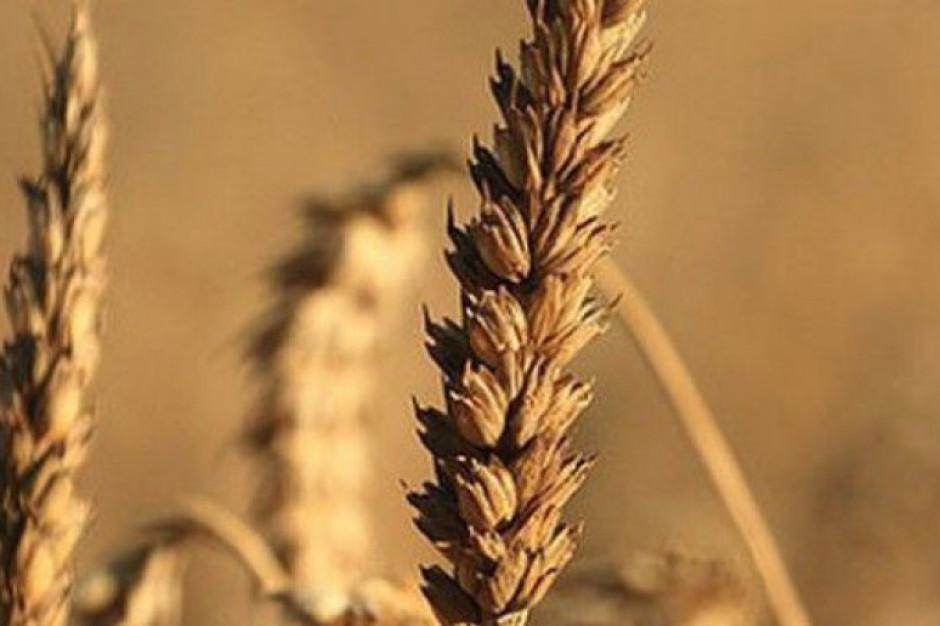 Krym eksportuje coraz więcej zboża do Syrii