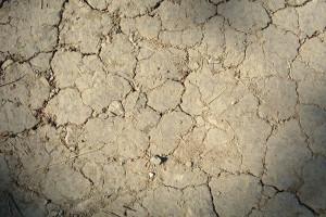 Do 20 czerwca susza się pogłębiła, najbardziej dotknęła uprawy zbóż
