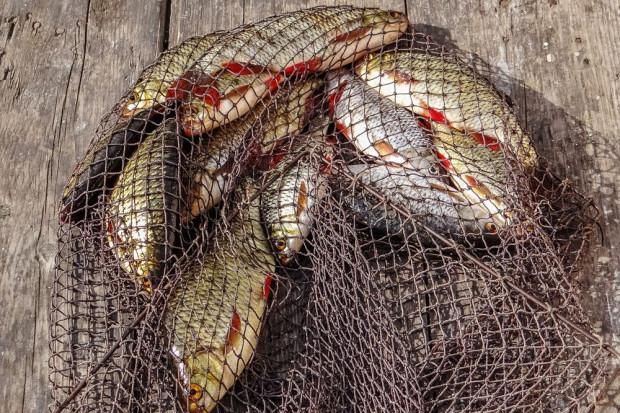27 czerwca jest Światowy Dzień Rybołówstwa