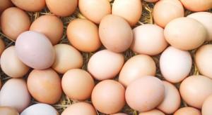 Czechy: Odejście od jaj z chowu klatkowego będzie kosztować 6 mld koron
