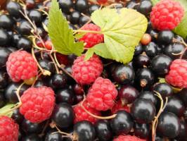 KRIR: Propozycje w zakresie poprawy sytuacji producentów owoców miękkich