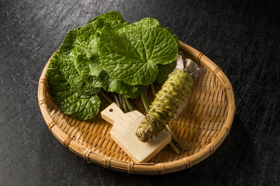 Wasabi Farm Poland - pierwsza w Europie kontynentalnej farma wasabi