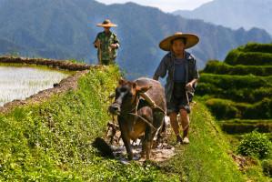 Chiny zapowiadają walkę z zanieczyszczeniem terenów wiejskich