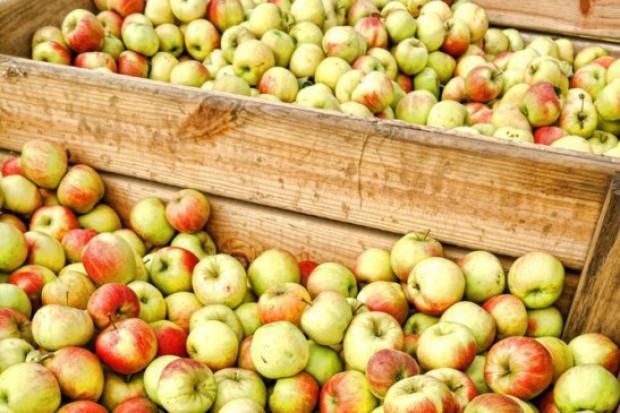 Bronisze: Kolejne odmiany jabłek pojawiają się w ofercie