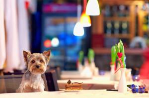Zwierzęta w restauracjach: W Portugalii ruszyły kontrole lokali