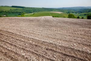 IUNG: Opady deszczu zmniejszyły suszę