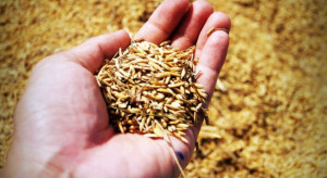 Zbiory zbóż w 2018 to ok. 24,0 mln t