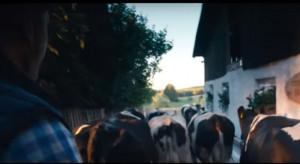Szczęśliwe życie krów w reklamie OSM Piątnica