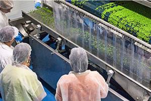 Masfrost zamierza zamknąć zakład przetwórstwa warzywno-owocowego w Tolkmicku
