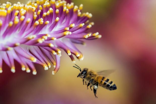 8 sierpnia to Wielki Dzień Pszczół