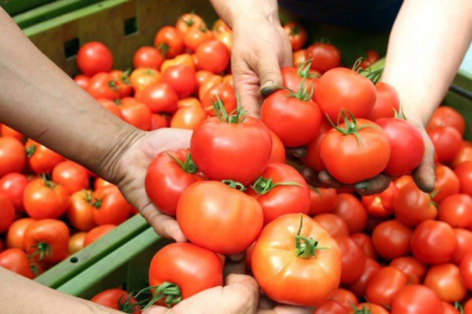 Demonstracje migrantów zatrudnionych przy zbiorach pomidorów we Włoszech