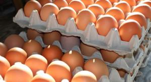 Niemcy: Jaja bio skażone salmonellą