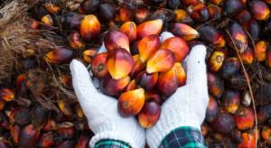Greenpeace naciska na koncerny, by przestały używać oleju palmowego