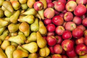 Zapowiadają się duże zbiory jabłek w UE