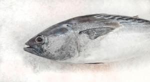 W Hiszpanii wykryto szajkę fałszującą mięso z tuńczyka