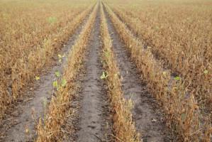 Susza powoduje najpoważniejsze problemy w sektorze warzywnym w UE w ciągu ostatnich 40 lat