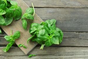 Baziółka: nasze konwencjonalne zioła niczym się nie różnią od ekologicznych