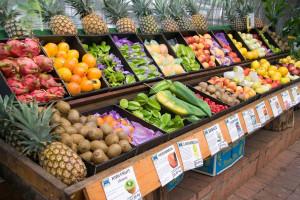 Polska technologia wspiera produkcję owoców tropikalnych w Australii