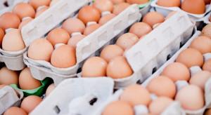 CBOS: Warunki chowu kur głównym czynnikiem zakupowym jaj w Polsce
