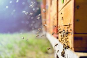 Lepkie rączki amatorów uli, pszczół i miodu