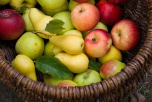 99 proc. jabłek i gruszek sprzedawanych w Biedronce pochodzi od 15 polskich dostawców