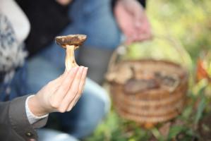 Niemcy: Zebrali za dużo grzybów, dostali wysoką grzywnę