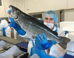 Jurassic Salmon. Pierwsza geotermalna hodowla łososia w Polsce szuka inwestora