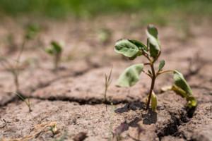 Na Mazowszu 145 tys. ha dotkniętych suszą