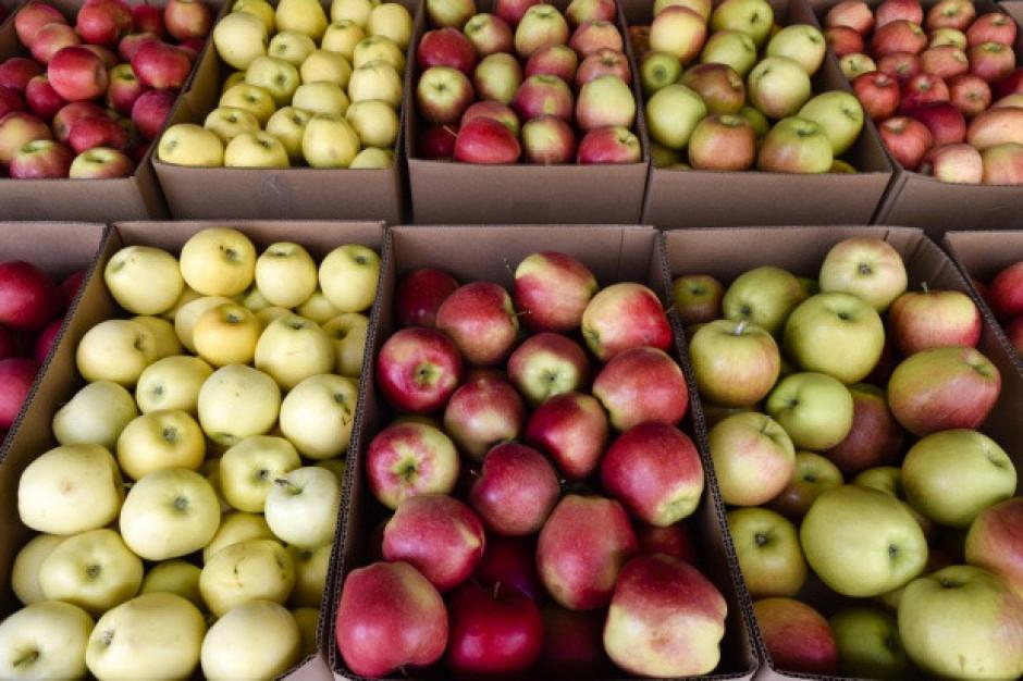 Sadownicy apelują do sieci handlowych by nie importowały jabłek spoza Polski