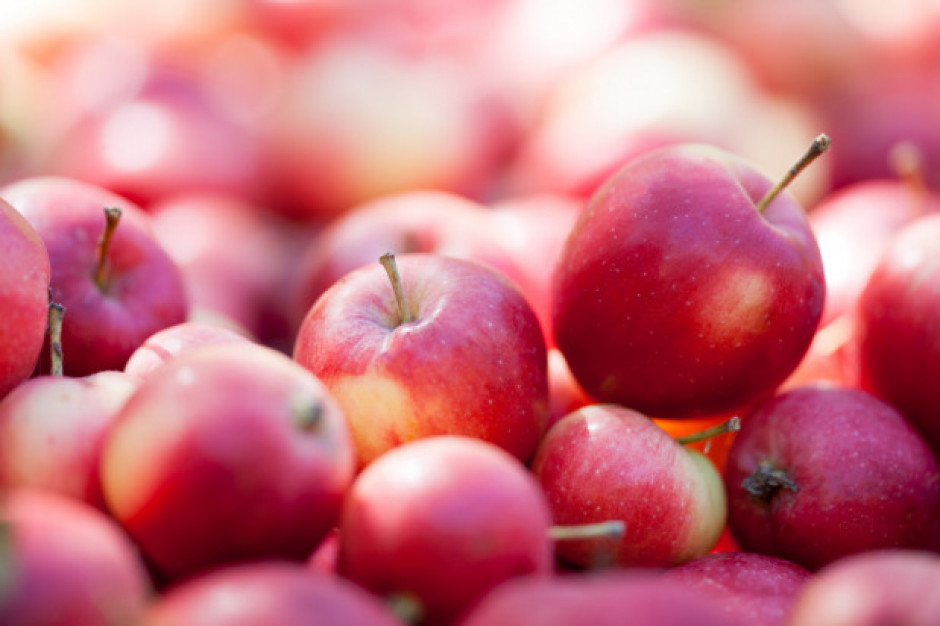 Sadownicy promują polskie jabłka w Egipcie