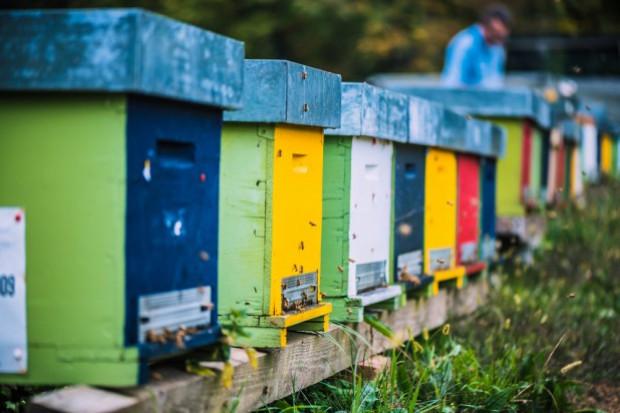 Podkarpacie: W pasiece znaleziono 2,5 mln martwych pszczół