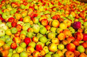 Eskimos: Prace nad uruchomieniem rządowego skupu jabłek zmierzają ku końcowi