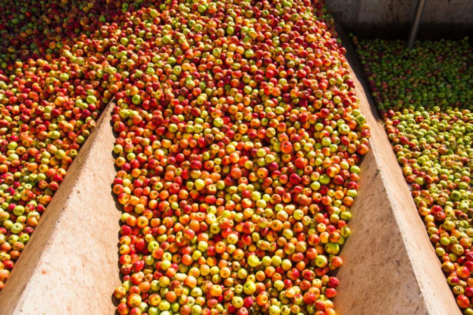 Spółka Eskimos poda listę punktów odbioru jabłek przemysłowych