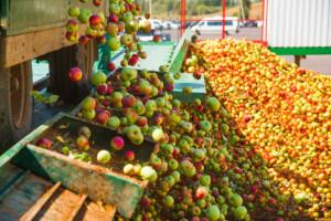 Firma Eskimos podała listę punktów, które przeprowadzą interwencyjny skup jabłek